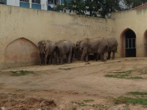Elephants, Lisbon Zoo