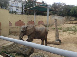 Elephant, Lisbon Zoo