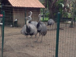 Ostrich, Lisbon Zoo