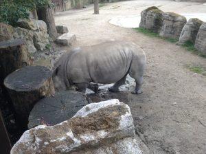 hippopotamus, Lisbon Zoo